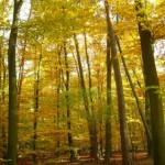 Blog_picture_forest
