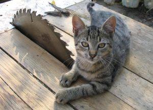 Пенсионери убиха жестоко котка! Какво ги очаква? Добър Адвокат в Пловдив